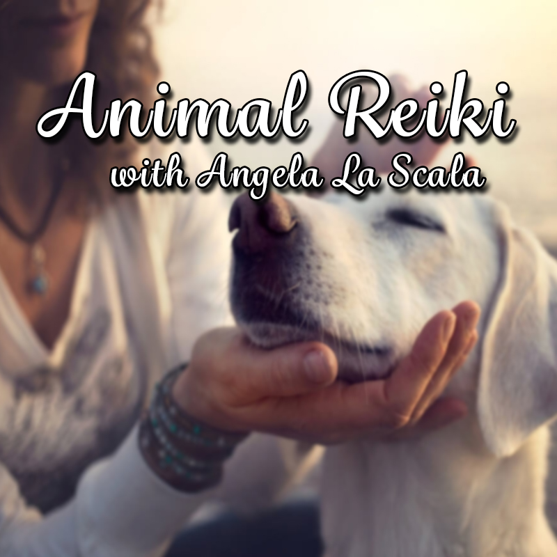 Animal Reiki with Angela La Scala on Zoom