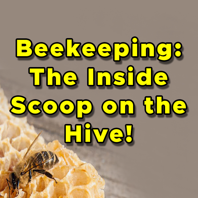 Beekeeping: The Inside Scoop on the Hive! on ZOOM
