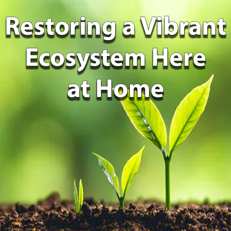 Restoring a Vibrant Ecosystem Here at Home