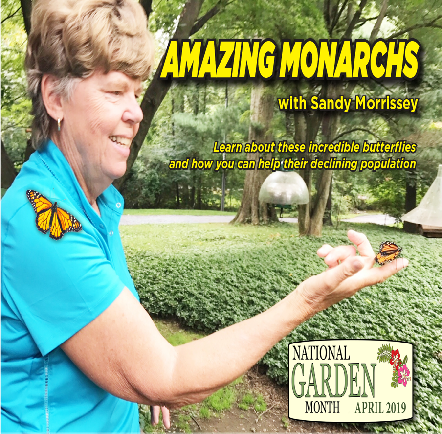 Amazing Monarchs with Sandy Morrissey