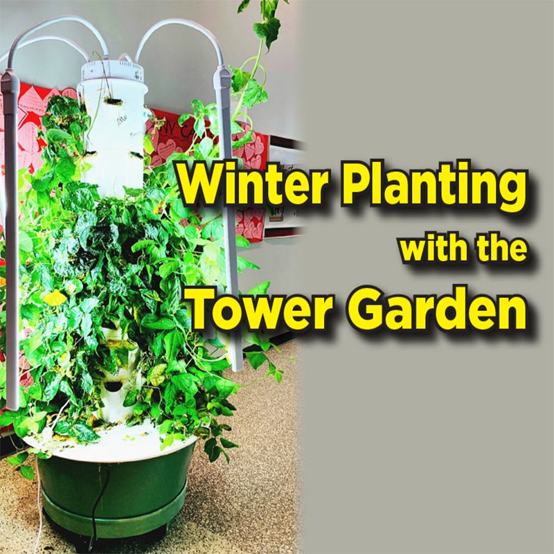 Winter Planting with the Tower Garden