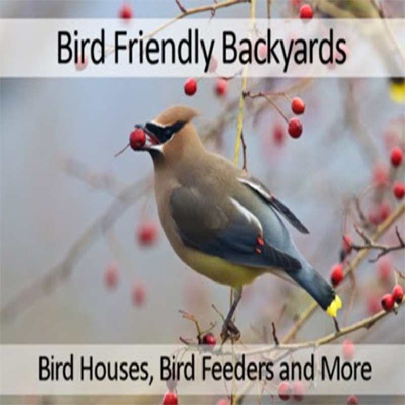 Bird Friendly Backyards on Zoom